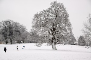 Front page: Snowy tree scene Photo courtesy of Yvonne Shillington