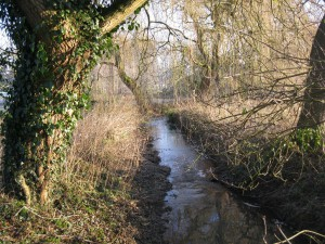 March: View of Luzley Brook from the bridge over to the Mound Photo courtesy of Jenny Radford