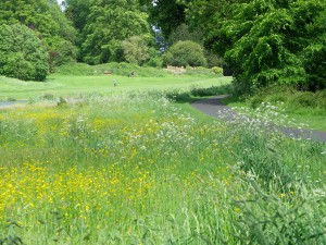 July: Wild flower meadow at western end of the lake Photo courtesy of Jim Dunlop