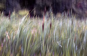 August - Summer grass by Paul Fitzpatrick