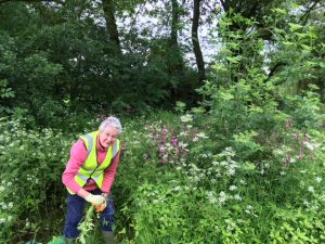 Removing Himalayan Balsam